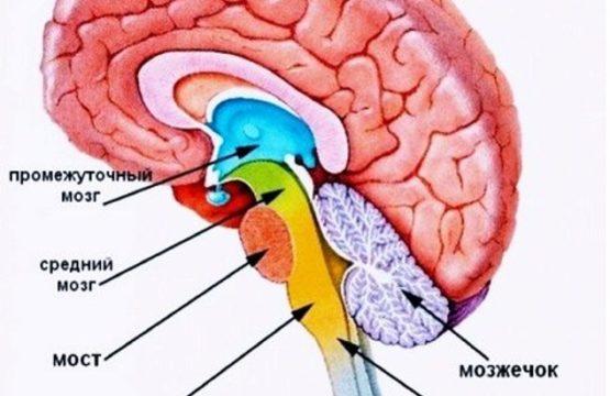 Анатомия костей черепа человека